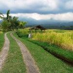 Jatiluwih rice fields – Bali – Indonesia