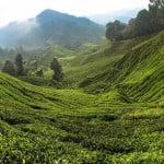 Cameron Highlands – Malaysia