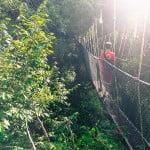 Taman Negara – Malaysia